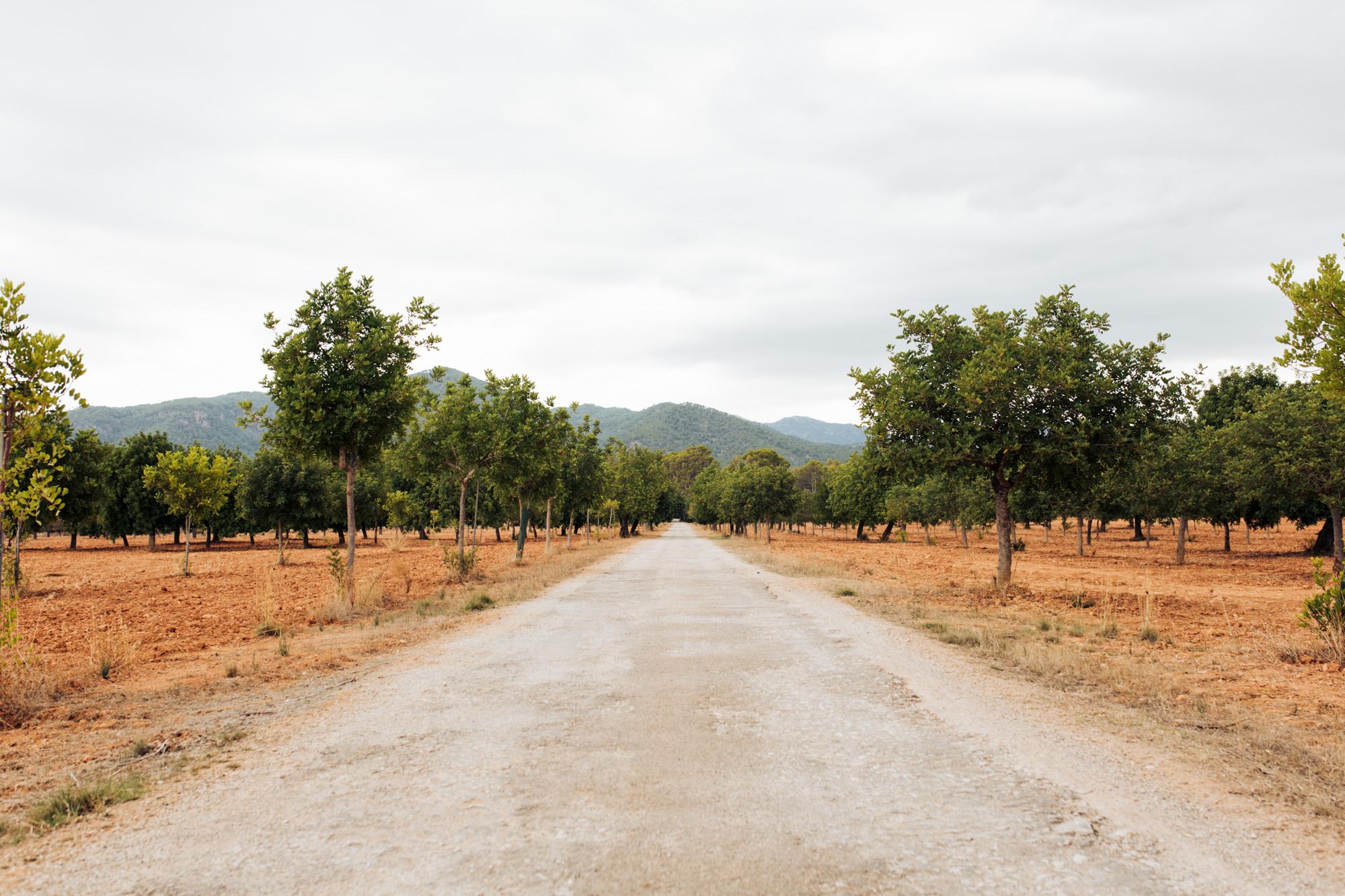Camino Rural Mallorca